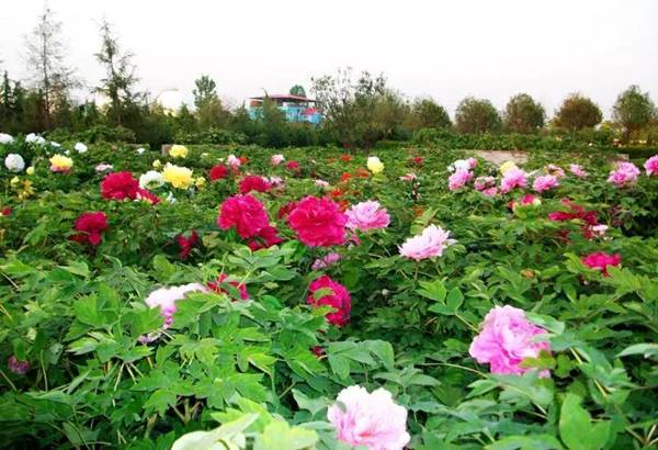 http://news.lyd.com.cn/pic/003/002/341/00300234138_c8584ec0.jpg